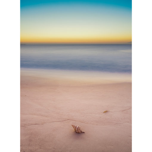 Seashell, Dawn | Sydney Shots