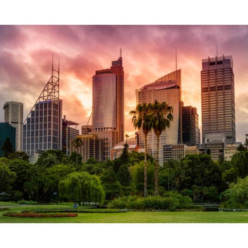 Royal Botanical Gardens, Sunset 10x8 | Sydney Shots