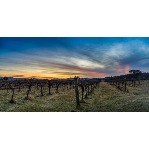 Mudgee Vineyard, Sunset | Sydney Shots