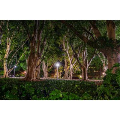 Hyde Park | Sydney Shots