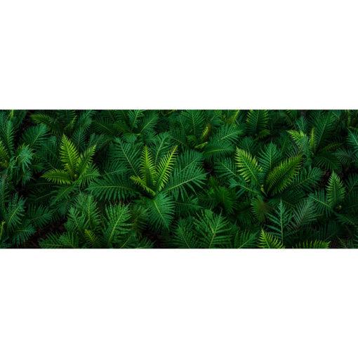 Fern Garden | Sydney Shots